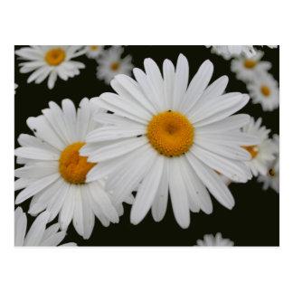 Marguerite postcard