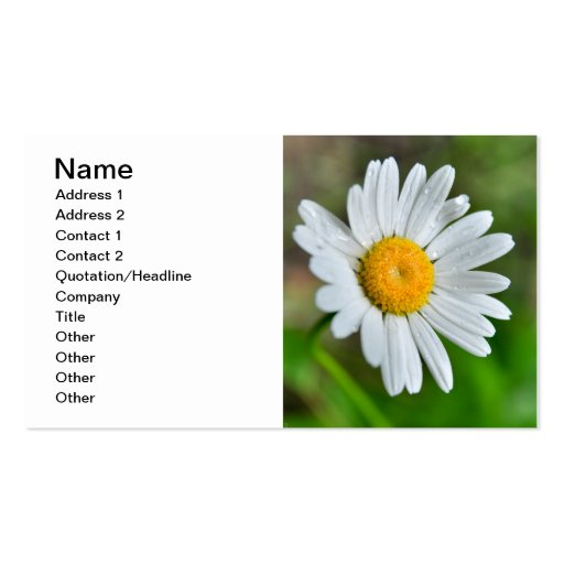 Marguerite-wild-flower426 WILDFLOWERS DAISY  SPRIN Double-Sided Standard Business Cards (Pack Of 100)