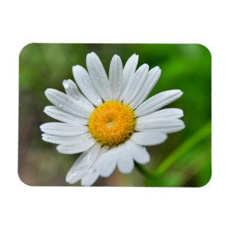 Marguerite-wild-flower426 WILDFLOWERS DAISY  SPRIN Rectangular Photo Magnet