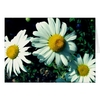 Marguerites Cards