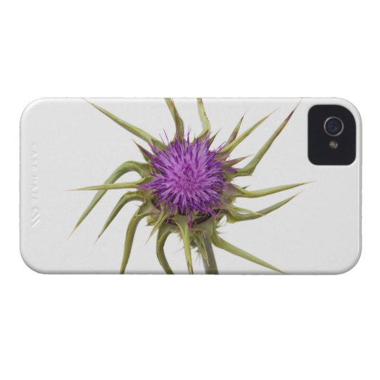 Marian thistle 2 iPhone 4 case