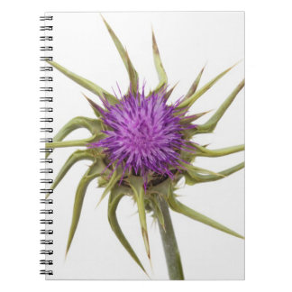 Marian thistle 2 notebook