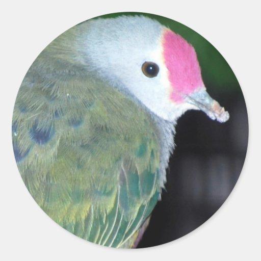 marianas fruit dove round stickers
