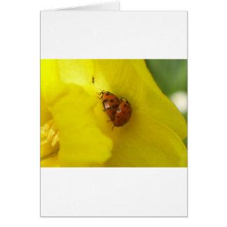 Marienkäfer Greeting Card