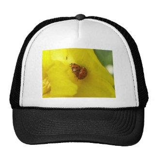 Marienkäfer Trucker Hat
