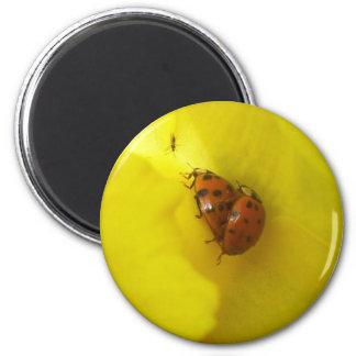 Marienkäfer 2 Inch Round Magnet
