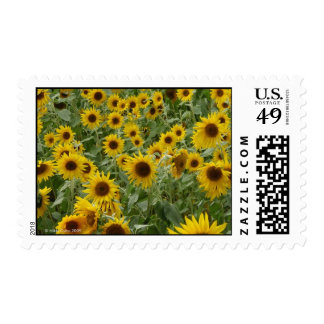 Marie's Sunflowers Postage Stamp