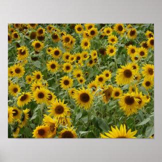 Marie's Sunflowers Print