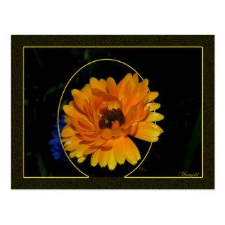 Marigold 1 post card