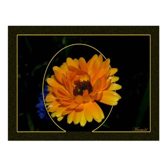 Marigold 1 postcard