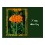 Marigold 2 postcard