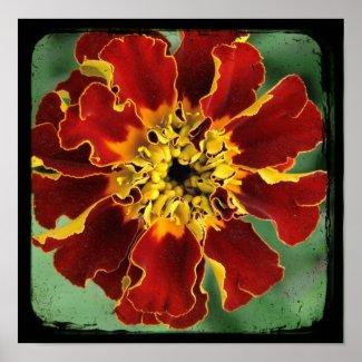 Marigold 2 print