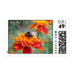 Marigold flower and bumblebee postage stamp