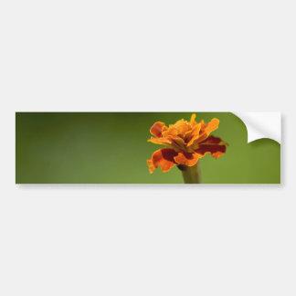 Marigold Flower Closeup Car Bumper Sticker