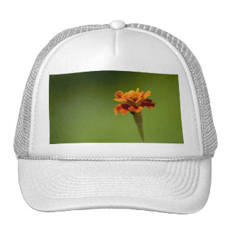 Marigold Flower Closeup Trucker Hat