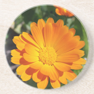 marigold flower coaster