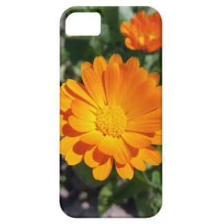 marigold flower iPhone SE/5/5s case
