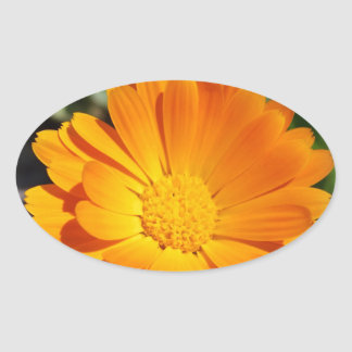 marigold flower oval sticker
