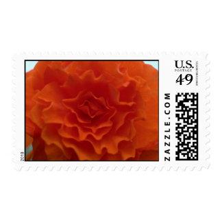 Marigold Flower Stamp