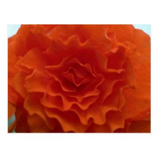 Marigold Flower Post Cards