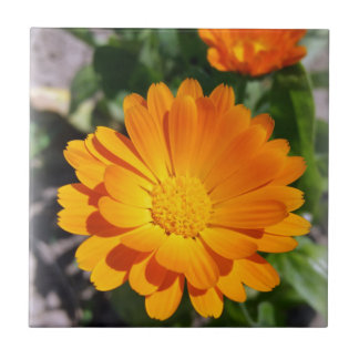 marigold flower tile