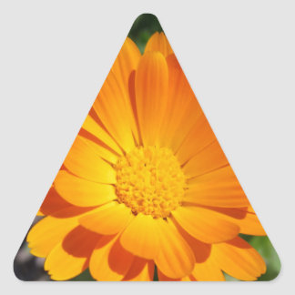 marigold flower triangle sticker