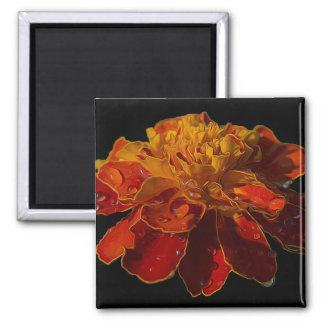 Marigold flower with water drops 2 inch square magnet