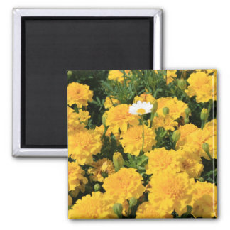 Marigold Flowers and a Daisy Flower Magnet