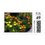 Marigold Garden Postage Stamps
