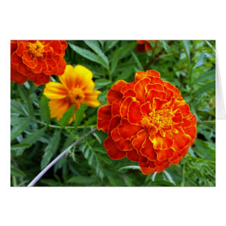 marigold in the sun card