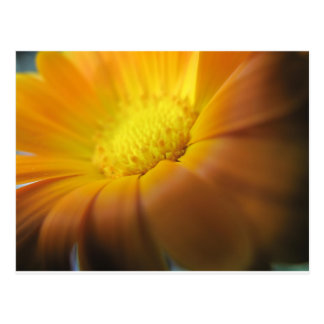 Marigold Postcard