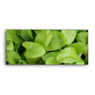 Marigold Seedlings Envelopes