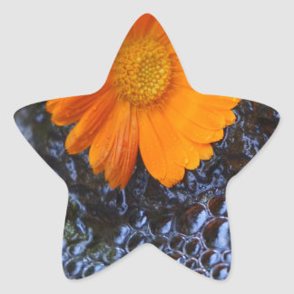 Marigold Star Sticker