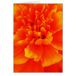 Marigold Stationery Note Card