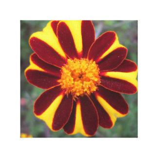 Marigold Velvet Rich Red Yellow Flower Gallery Wrap Canvas