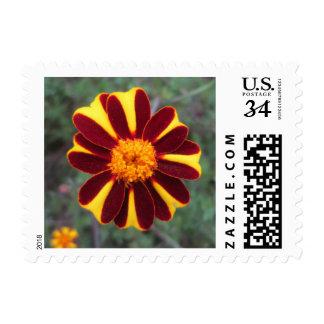 Marigold Velvet Rich Red Yellow Flower Postage