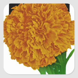 Marigold Vintage Seed Packet Square Sticker