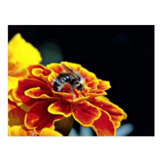 Marigold with bee flowers post card