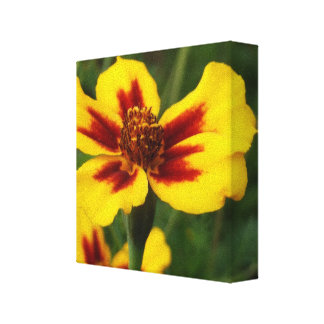 Marigold Wrapped Canvas Print