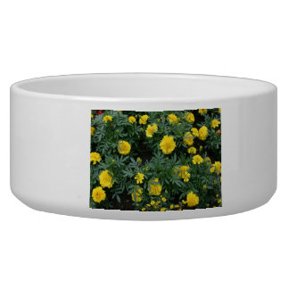 Marigolds and daisies bowl