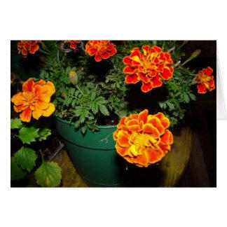 Marigolds Card