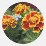 Marigolds Classic Round Sticker