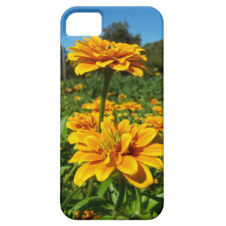 Marigolds Cover iPhone 5 Cases