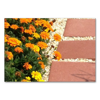 Marigolds Flowers Patio Pavers Flashcards Card