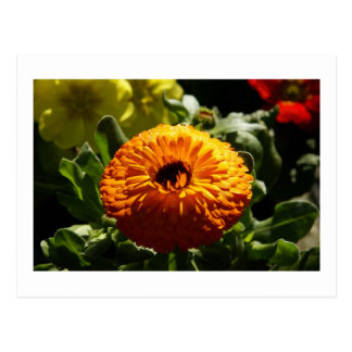 Marigolds Post Card