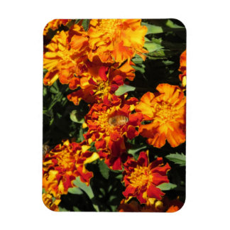 Marigolds with a Bee Magnet