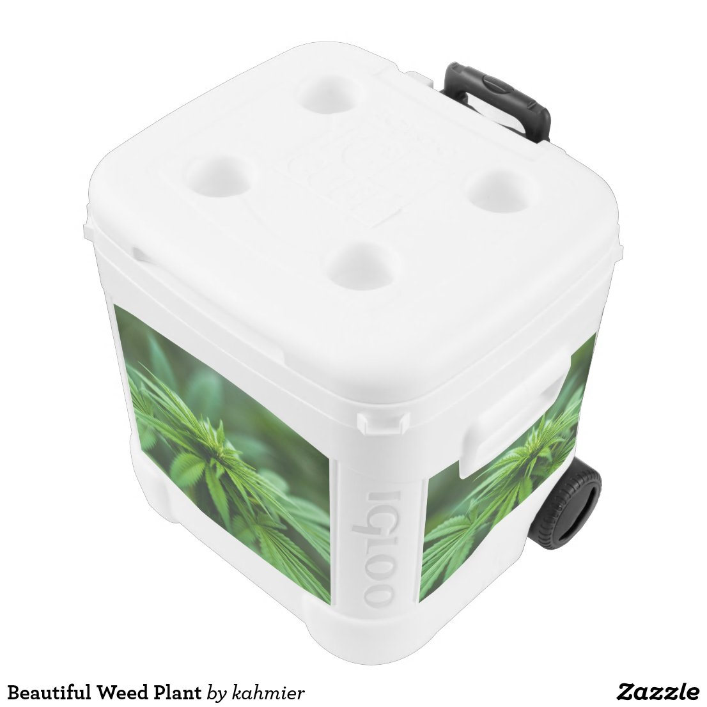 Marijuana Cooler