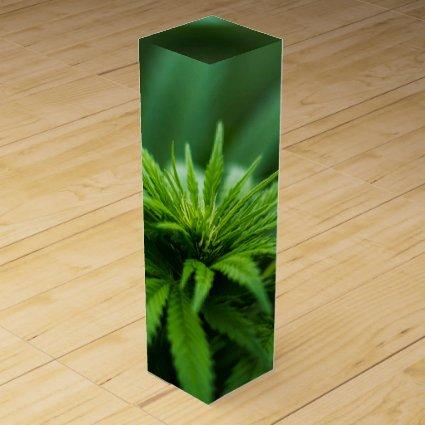 Marijuana Wine Box