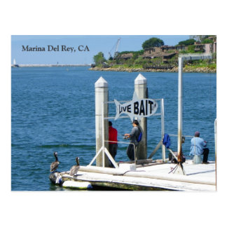 Marina Del Rey Fishing Postcard! Postcard