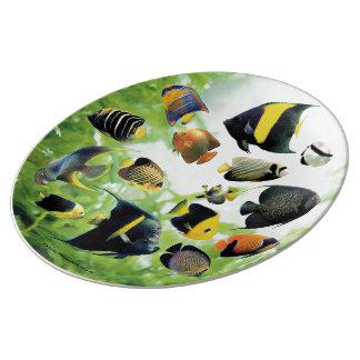 Marine angelfish dinner plate